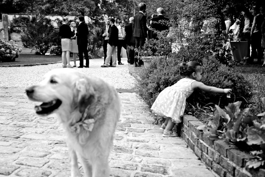 des fleurs, des chiens champêtre..